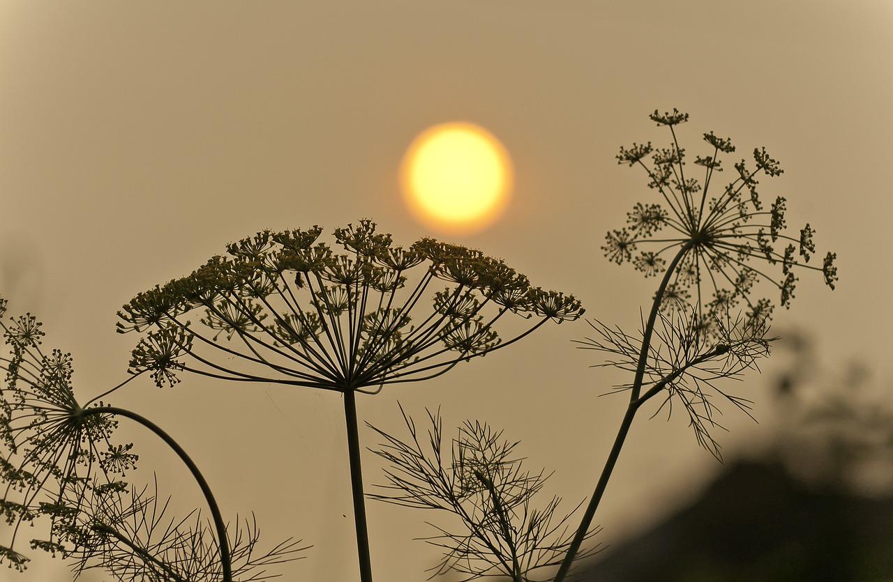 Arbre et coucher du soleil